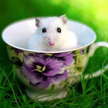 eliminar ratas madrid